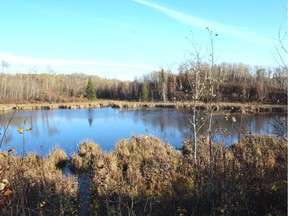 A beaver pond in knob and kettle country. Neil Waugh/Edmonton Sun