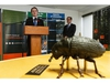A 20x model of a mountain pine beetle is seen as Paul Whittaker (right), President & CEO, Alberta Forest Products Association, and Devin Dreeshen, Minister of Agriculture and Forestry speak during the announcement of the Alberta government's increase in the mountain pine beetle management program's annual budget during a press conference in Edmonton, on Thursday, Oct. 31, 2019. Photo by Ian Kucerak/Postmedia