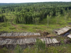 Sustainability is often perceived as a problem for the forestry business, but the industry knows its strength is inextricably bound up with healthy forests and good long-term planning.