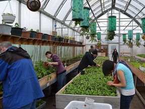 All images courtesy of Iqaluit Community Greenhouse Society