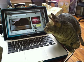 Can checking out the odd cat video on YouTube help make employees more productive?