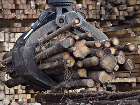 """Canada faces """"stormy days"""" ahead on softwood lumber and other issues with the U.S. after incoming president Donald Trump picked someone with a protectionist bent to be the next U.S. trade representative, says a former Canadian diplomat."""