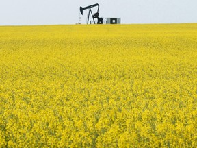 A pump jack works in a field near Lake Saskatoon surrounded by a blooming canola field.