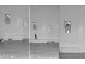 This photo of three images taken from October 2017 video produced by Sierra Research Laboratories shows mice congregated around and climbing on a device that was supposed to scare them away. The images were included in a civil complaint filed with the U.S. Attorney's Office for the Southern District of New York against BHH, the New York based company that produces the device. On Wednesday, Sept. 5, 2018, a New York judge said pictures of mice lounging around the anti-rodent device are reason enough to let a lawsuit proceed against the company that sells them. (Sierra Research Laboratories via AP)