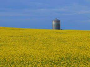 Amid this uncertainty, canola remains a commodity shrouded in optimism in Canada.