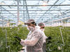 Guatemalan workers tend to cannabis plants at Canopy Growth Corp.'s facility in Aldergrove, B.C., in early March 2019.