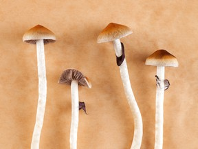 Unlike cannabis, research into psilocybin's medical applications is limited by the fact that the use of magic mushrooms remains illegal virtually everywhere.