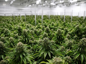 Profitable cannabis companies want to buy their way into niche segments and expand their brands, betting the November U.S. presidential election will lead to weed becoming legal across the United States.