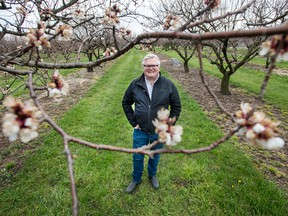 aul Moyer, Co-Founder of Clean Works Medical stands in his Beamsville apricot orchard in April.