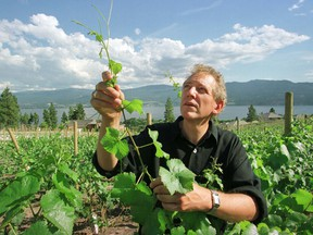 Anthony von Mandl checks grape vines at his Mission Hill Winery in 1999.