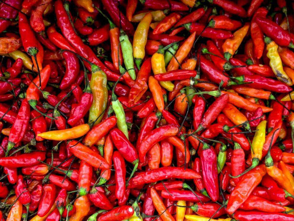 grow hot peppers