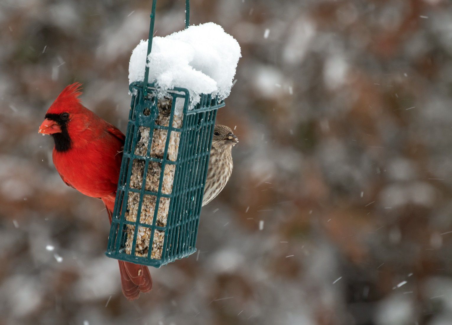 How to attract birds to your winter garden