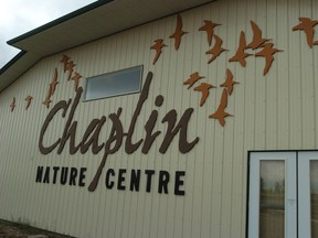 The town of Chaplin has turned into a tourist attraction the shorebirds that come through the area.
