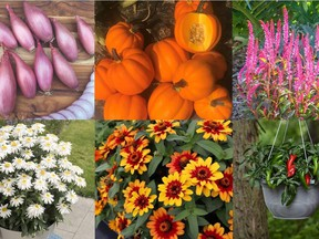 2021 All-America Selection Winners. Clockwise from top left: 'Creme Brulee' shallot, 'Goldilocks' acorn squash, 'Candela Pink' celosia, 'Pot-a-peno' jalapeno pepper, 'Profusion Red Yellow Bicolor' zinnia, 'Sweet Daisy Birdy' Shasta daisy. (Photos courtesy All-America Selections)
