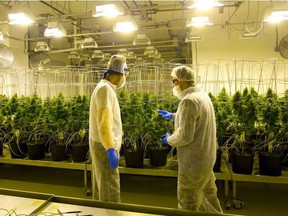 Pete Young, the master grower for Indiva in London, talks with a visitor. The federal government has proposed a 2.3 per cent levy on licensed producers to cover the cost of regulating the cannabis industry. (Free Press file photo)