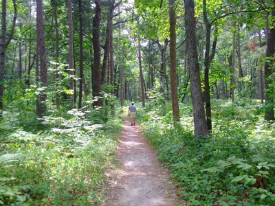 Pinery Provincial Park's Hickory Trail boasts a rich diversity of plants on its .9 km path.  BARBARA TAYLOR/THE LONDON FREE PRESS