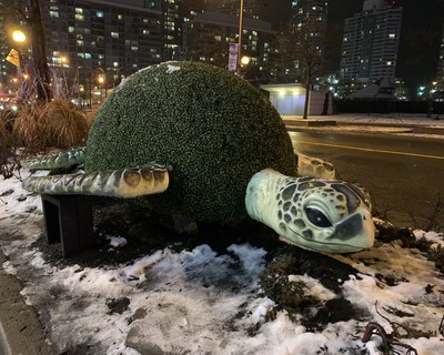 Sight-seeing in downtown Toronto can be fun day and night especially if you love turtles. (BARBARA TAYLOR, The London Free Press)