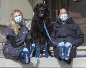 Nurse Amanda Goossens and Dr. Rod Lim, with Lim's Newfoundland Obi, all wear COVID Warrior socks that Lim designed and ordered to brighten the mood in his hospital department. The socks are now being sold by Collins Formal Wear with some of proceeds going to front-line workers.  (Mike Hensen/The London Free Press)