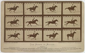 """Title: The Horse in motion. """"Sallie Gardner,"""" owned by Leland Stanford; running at a 1:40 gait over the Palo Alto track, 19th June 1878 / Muybridge. Library of Congress Prints and Photographs Division Washington, D.C."""