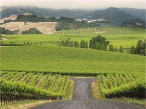 In California, appellation wines like those of Sonoma County must have 95 per cent of the wine being made from grapes harvested that year.