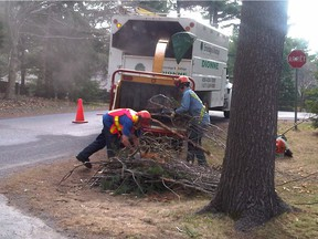 Workers in St-Lazare pick up tree branches left on the side of the road. The branches have to be stacked a certain way at the roadside, according to the rules.