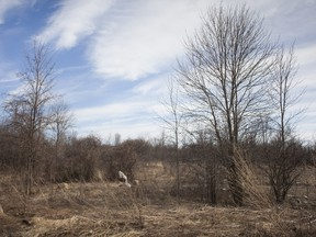 A controversy exists over the development of an  area of land at Cap Nature in Pierrefonds. Conservationists say the green space is essential and should not be developed.