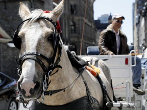 Moise Cohen and his horse Chanel wait for a fair in Old Montreal on May 18, 2016.