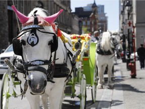 Horse-drawn calèches will be a thing of the past in Montreal under new rules the city plans to adopt at the end of August.