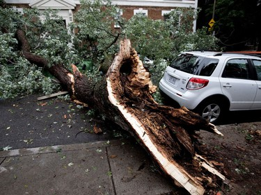 A car sits undamaged after a rotted tree fell and damaged three other cars on Prud'homme Ave. when a storm blew through the N.D.G. district of Montreal on Tuesday August 22, 2017.