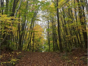 Some Pincourt residents launched an online petition to save Rousseau Forest, located between Olympique Blvd., Place Rousseau, Laflèche St. and 19th Ave.