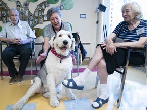 Bob Livingstone with his wife, Marilyn, and Frederika Neuman, far right, get  acquainted with Charlotte, an Old English sheepdog, as she visits with seniors in a drop-in program at the Côte-St-Luc Aquatic Centre on Monday Aug. 20, 2018.