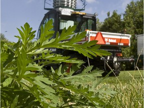 Pincourt released an update on its ongoing crackdown on ragweed in its territory.