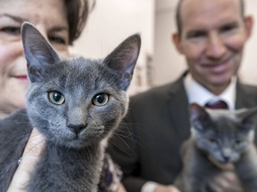 Côte-St-Luc councillor Mike Cohen and Nancy Reich with twins LuLu and MiMi, whom she adopted from a litter born to a feral cat.
