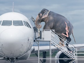 A long list of bizarre and strange animals are queuing for flights alongside their owners.