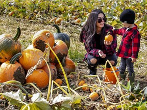 Lina Maiolo and her son Leo pick pumpkins in the pumpkin patch at Quinn Farm in Ile-Perrot, west of Montreal
