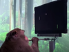 The 3-minute video by Neuralink shows Pager, a male macaque with chips embedded on each side of its brain, playing Mind Pong.