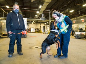 Rosie the Rottweiler visits the FedEx facilities at Mirabel Airport.