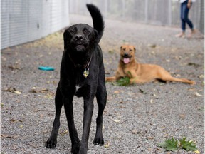 Two dogs are spotted along a passage leading to the enclosed dog run at Terra-Cotta Park in Pointe-Claire.