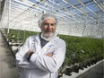 FILE: Irwin Simon is pictured among rows of cannabis plants at Aphria Inc., in Leamington, Ont. on Oct. 25, 2019. /