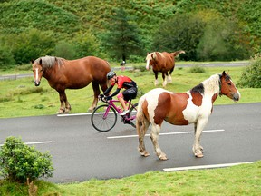A cyclist makes his way between horses during the first day of the 2016 Haute Route Pyrenees timed cycling event in France.
