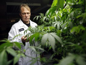 Bruce Linton, co-founder, CEO and chairman of Tweed Inc. checks some of his medical marijuana plants at the Smiths Falls facility Friday October 23, 2015.