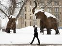 A woman walks past the Woolly Mammoths outside the Museum of Nature in Ottawa