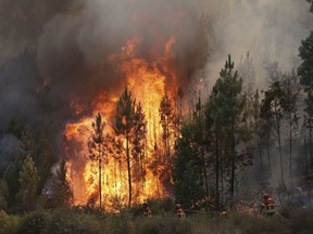 Firefighters battle flames by the village of Chao de Codes, near Macao, central Portugal, Wednesday, Aug. 16 2017. The Portuguese Civil Protection Agency said Wednesday that 141,000 hectares of woodland have burned so far this year, compared with an annual average of 45,000 hectares in the previous 10 years. Over the past week, the fires left 74 people injured, six of them seriously. (AP Photo/Armando Franca)