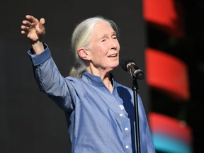 Dr. Jane Goodall speaks onstage during the 2017 Global Citizen Festival in Central Park to End Extreme Poverty by 2030 at Central Park on September 23, 2017 in New York City.