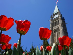 The 66th edition of the Canadian Tulip Festival is set to run May 11 to 21 at venues throughout Ottawa.