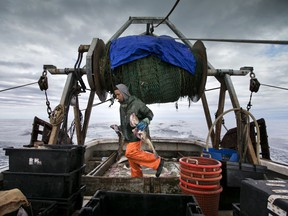 FILE - In this April 23, 2016, file photo, Elijah Voge-Meyers carries cod caught in the nets of a trawler off the coast of New Hampshire. American fishermen are slated to lose thousands of pounds of valuable fishing quota under a new catch share agreement with Canada for the 2019 fishing year, that was approved in September.