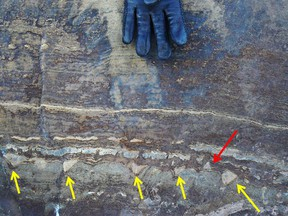 This photograph shows putative stromatolitic structures in an outcrop (arrows). A new study says some structures point down and some point up: Evidence that these are not relics of microbial mats growing up from a sea floor, but are just formed through geological processes, the authors say.