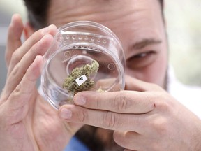 Jean Marc looks at a sample at a cannabis store in Winnipeg, Manitoba, Wednesday, Oct. 17, 2018. Canada became the largest country with a legal national marijuana marketplace as sales began early Wednesday.