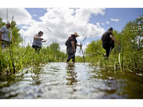 FILE - In this July 11, 2018 file photo, Kimberly Loring, from right, Roxanne White, Lissa Loring and George A. Hall, cross a creek looking for clues during a search for the Loring's sister and cousin, Ashley HeavyRunner Loring, who went missing in 2017 from the Blackfeet Indian Reservation in Valier, Mont. The number of Indian Country crimes that the U.S. Justice Department decided to prosecute has not shown significant change in recent years, despite programs and attempts to boost both public safety and prosecutions of sexual assaults and other crimes on reservations, according to federal figures Wednesday, Nov. 21, 2018.