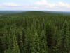 At least one-fifth of the carbon that cycles through air, soil and oceans passes through boreal forests, a University of Alberta soil biogeochemist says.